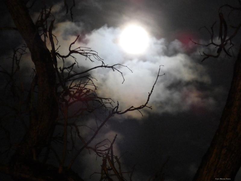 "Photo of the first full moon of Spring over Jerez de la Frontera, through the trees of calle Porvera during Semana Santa, by Fernando ""Curro"" Moreno Torres."