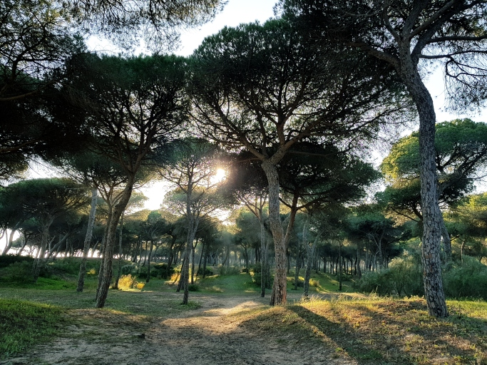 Very close to the beach is a big green space overlooking the beach and the bay--an ecological park made up of pine trees and dunes (Pinares y Dunas de San Anton) with shaded picnic areas. #freeelectrons.family