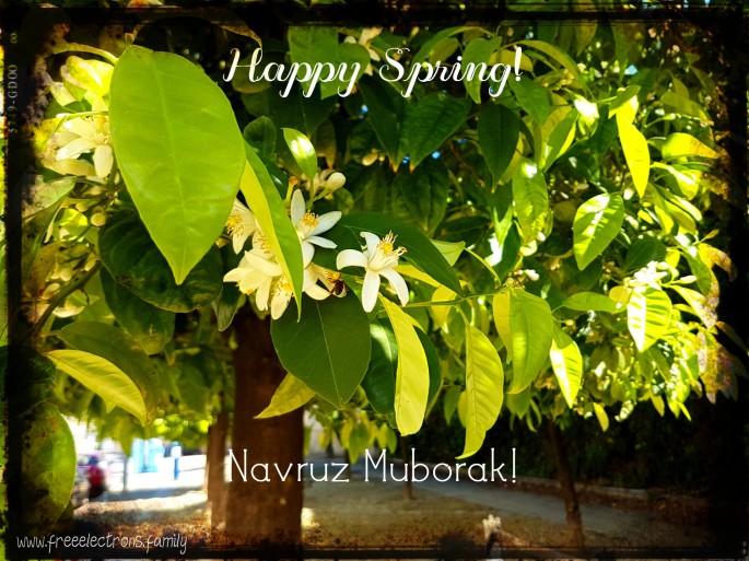 White flowers of the orange trees in full bloom here, along the old northern fortification wall on Calle Muro, Jerez de la Frontera.  Happy Spring!  Navruz Muborak!