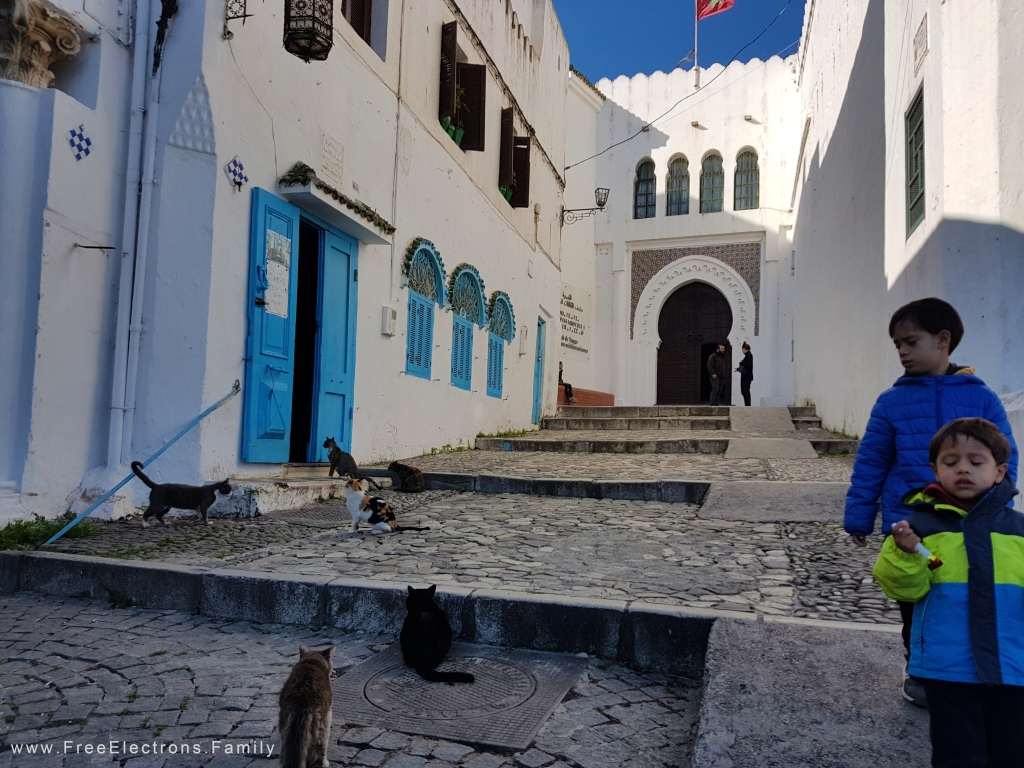 Two young boys , looking tired, walking and looking at cats on the stone street leading up to an Arabic portico of a museum.